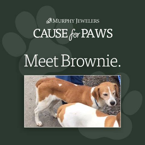 Cause for Paws - Meet Brownie