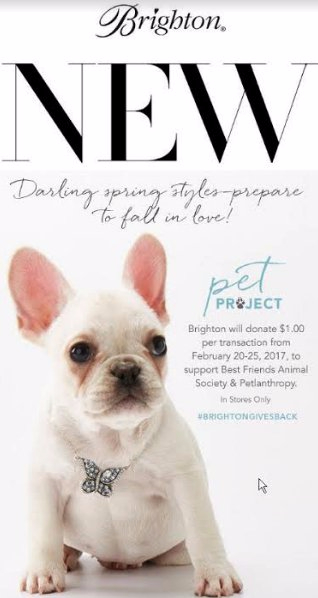 #BrightonGivesBack ~ Pet Project